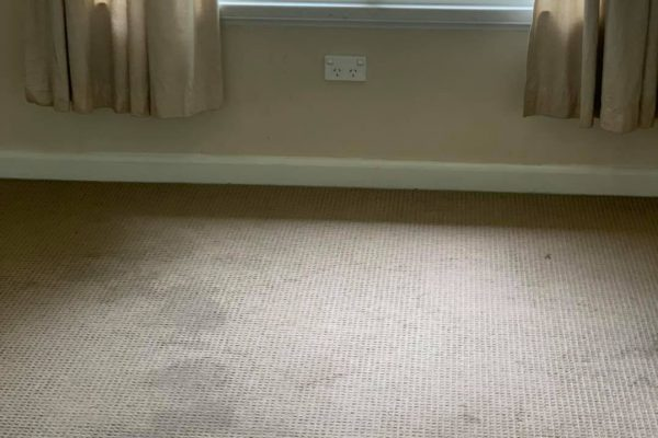 carpet cleaning 5